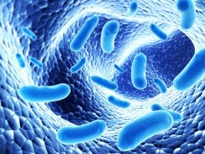 probiotics-300x225