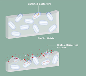 biofilm disruption