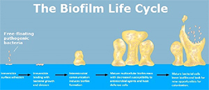 fibromyalgia and biofilm