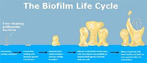biofilm life cycle restore 3